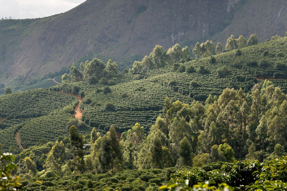 Landschaftsaufnahme von Kaffeefeldern auf der Fazendas Dutra.